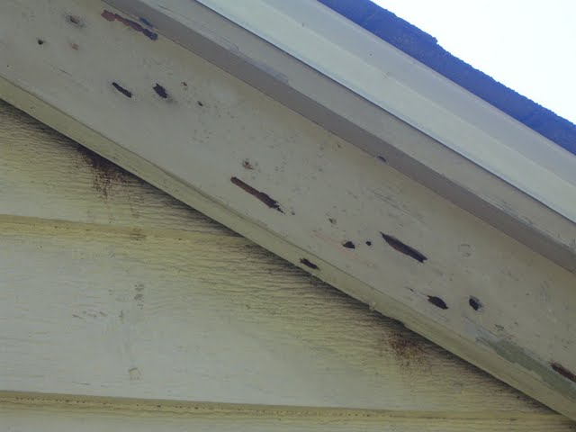 Carpenter Bee home inspection NH