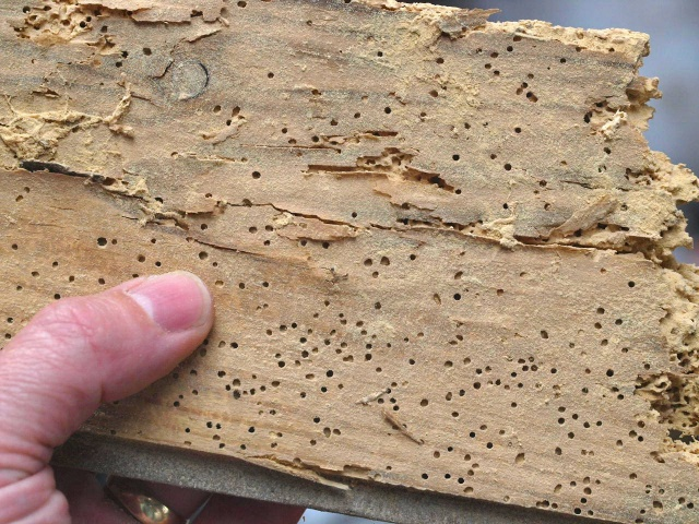 Woodworm home inspection NH