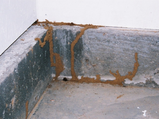 Termite home inspection NH